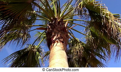 Palm tree in the wind on a sunny day