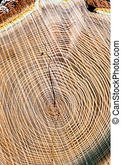 tree trunk - ovum-sectional area of ??a tree trunk, symbol...