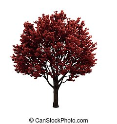 realistic vector tree isolated