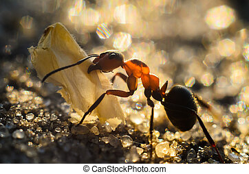 the ant carries the tentacles of the butterfly wing.