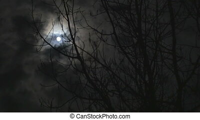 Time lapse of the moon glowing behind the clouds and tree