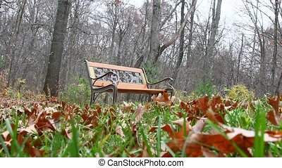 Autumn - A bench with autumn leaves.
