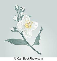 Flower Jasmine and buds vectoreps - Flower twig jasmine...