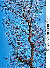 Bare Tree against Sky - Bare Tree at Spting against the Blue...