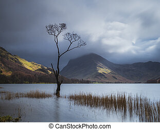 Buttermere Tree - Single tree standing in the waters of...