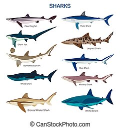 Shark fish vector set in flat style design. Different kind...