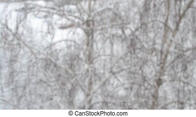 Snow falling on birch tree backdrop with dogs running in background