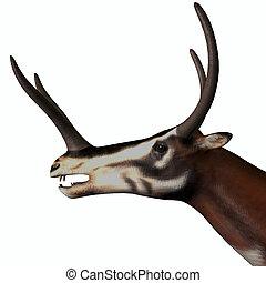 Kyptoceras Mammal Head