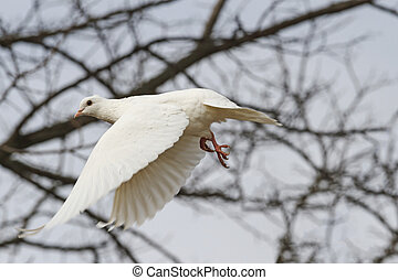 White dove flying through the thicket