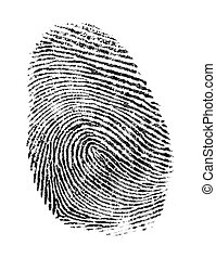 Thumb Print - Black Ink Fingerprint Isolated on a White...