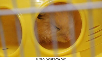 Hamster sleeping in cage 19113_02