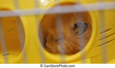 Hamster sleeping in cage 19113_03