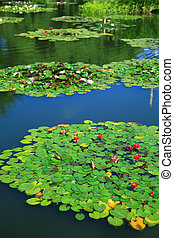 Garden pond - Large pond with water lily in the garden