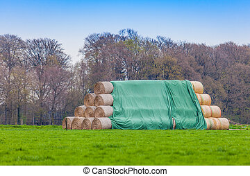 hay-roll on meadow. Hay bales on the field - hay-roll on...