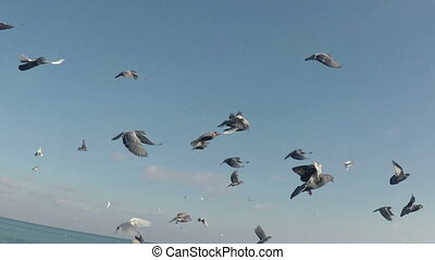 flock of pigeons flew up into the sky slow motion