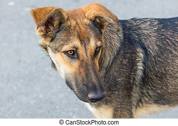 Head of domestic dog on natural background