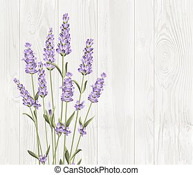 Bunch of lavender flowers on a white background - Bunch of...