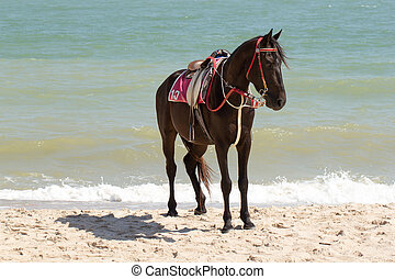 the horse sunbathe on sand and the beach