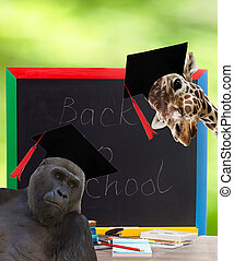 school board and African animals