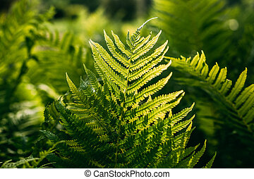 Beautyful ferns leaves green foliage natural floral fern...