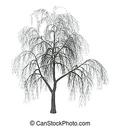 3D Illustration Willow on White - 3D 3D Illustration of a...