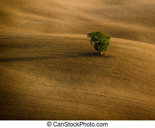 The lonely tree - Lonely green tree over the hill in the...