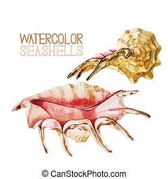Watercolor seashells collection - Set of watercolor...