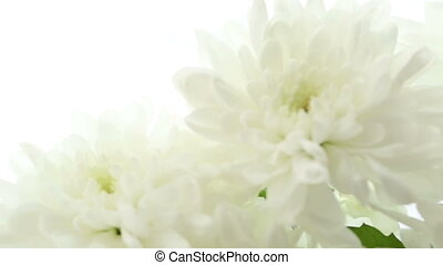 Beautiful bouquet white chrysanthemums on white background...