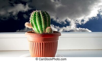 Cactus on window sill and sky - Cactus on window sill and...
