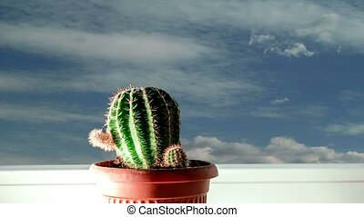 Cactus on windowsill and sky - Cactus on window sill and sky...