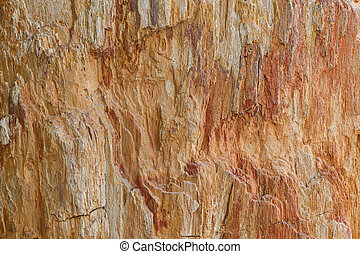 Texture photo of petrified ancient wood changing into stone...