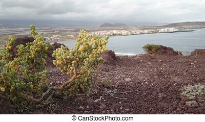 Vegetation growing on volcanic rocks in the south of...