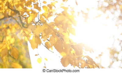 Close up of beautiful landscape with magic autumn trees, yellow leaves and incredibly warm calm sunny weather.