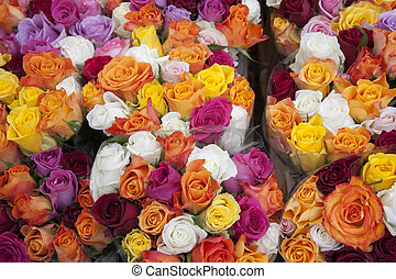 Colored Roses on Sale in Market, Bonn, Germany