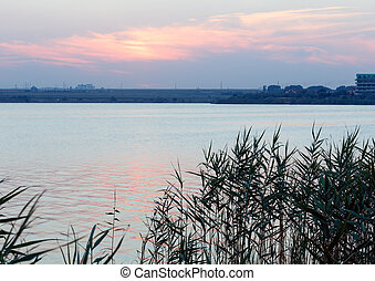 Evening lake scenery - Evening lake scenery with reeds in...