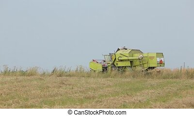 Combine green squinting in field cereals in field - Combine...