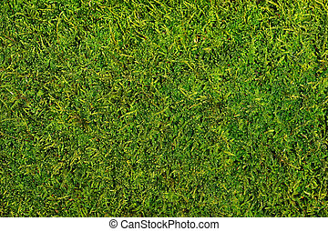 Moss - Background of moss close up