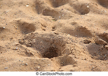Background of sand - Background of friable sand in sunny day