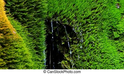 Drops Of Waterfall Falling Down From Moss - CLOSE UP In the...