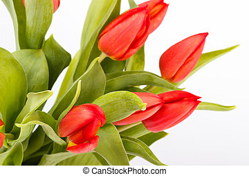 Bouquet of red tulips over white background,selective focus
