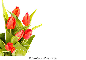 Bouquet of red tulips isolated over white background