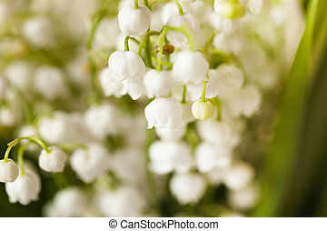 lilies of the valley - photographed close-up white flowers...