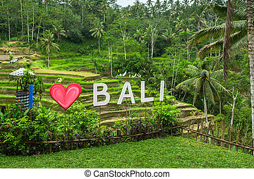 I Love Bali text written on the green rice terraces.