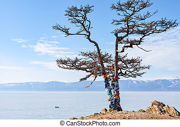 Lonely tree on a background Olkhon Island