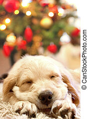 puppy golden retriever asleep in front of a christmas tree