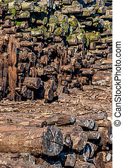 covered stack of wood with moss - stack wood overgrown with...