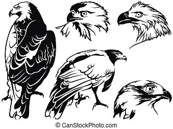 Eagle Tattoo Drawings - Black and White Illustrations,...