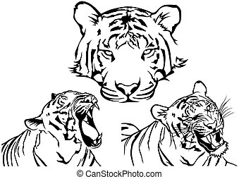 Tiger Tattoo Drawings - Black and White Illustrations,...