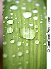 of water droplets on leaves