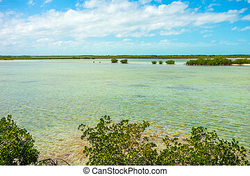 tranquil nature in florida keys